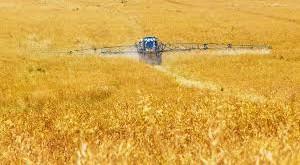 campo-agricolo