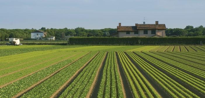 Il mercato dei prodotti agroalimentari